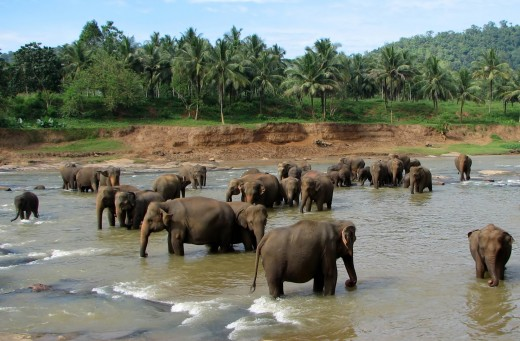 Best places to visit in Sri Lanka, elephants bath