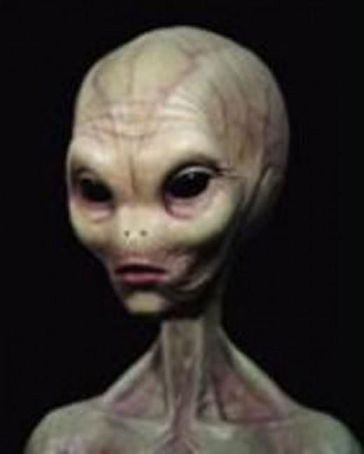 Supposed Grey Alien.