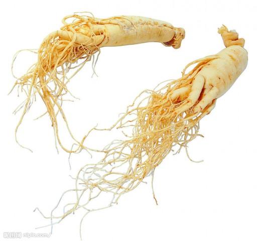 Fleshy ginseng roots