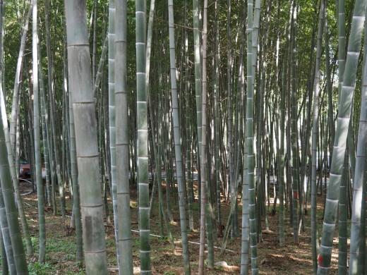 Bamboo Gardens