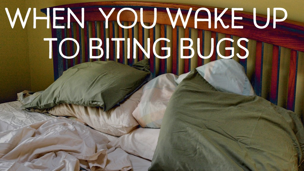what to do about bed bugs
