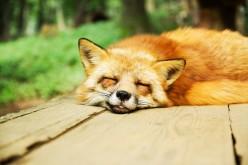 Sleep Interruption Lucid Dream Induction