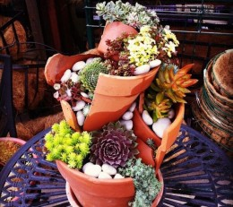 Broken pottery can be creatively recycled as planters for water-wise succulents.