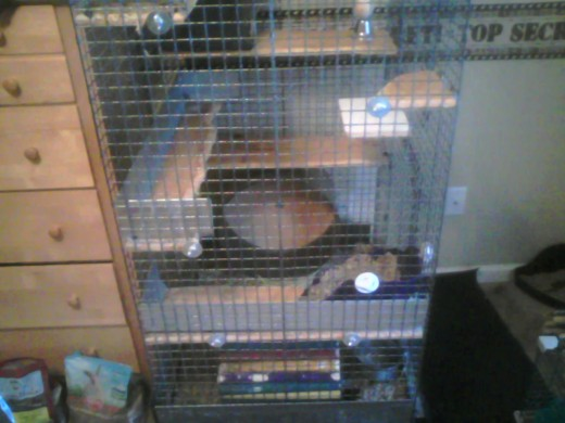 Chinchilla cage - 3 levels of various shelves and a running wheel at the bottom. Perfect for Chinchilla exercise)