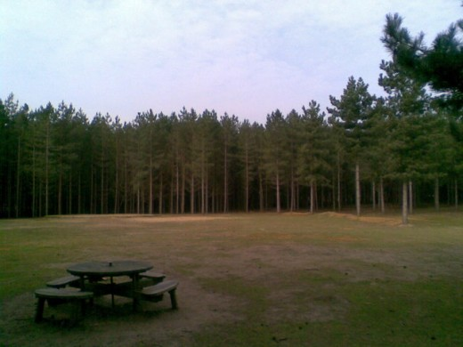 Rendlesham Forest, the site of UK's most significant UFO incident.