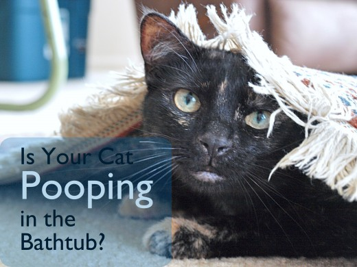 A cat that persists in pooping in the bathtub or shower may have a medical problem.