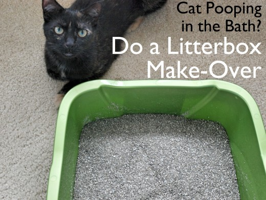 If your cat is is ignoring their litter box, it may be time to clean the litter box, switch to a different type of litter, and/or offer your cat two letterboxes: one for peeing and one for pooping.
