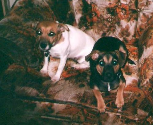 This my Boomer(left) and her son Junior both were great companions now chasing balls in Heaven. I miss them both very much.