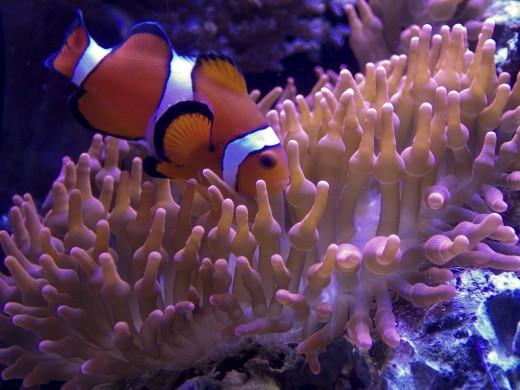 Marine biology is the scientific study of organisms in the ocean or brackish bodies of water.