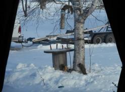 Minnesota Squirrel Watching: A Retirees Dream