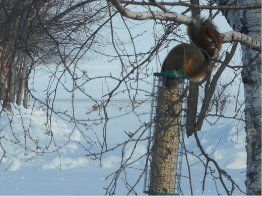 It looks Odd but the squirrel has unscrewed the fill cap on the top and tossed it to the ground.