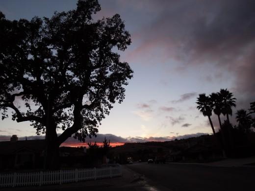 Oak Tree at dusk shot with Nikon Coolpix S8200
