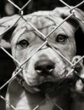 Why You Should Share Stories of Animal Cruelty - Even When They Are Sad or Graphic