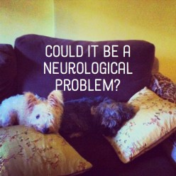 Warning Signs of Neurological Disorders in Canines