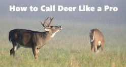 Doe Bleat or Buck Grunt?  The Beginners Guide to Using Whitetail Deer Calls