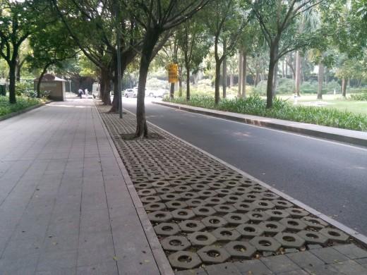 Serene and green, Shenzhen