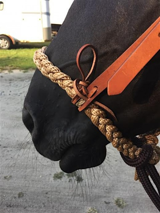 Bosal helps protect from mouth damage from poorly fitted metal bits