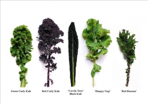 Did you know there are different types of Kale?