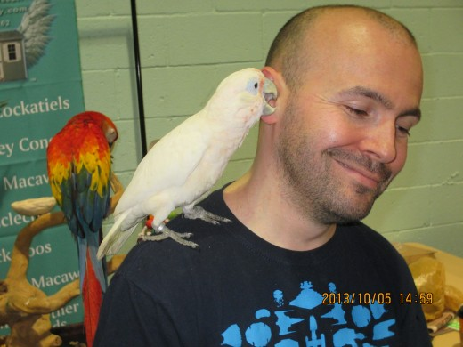 Have ya heard the latest parrot news? - Photo by George Sommers