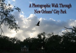 A Photographic Walk Through New Orleans City Park