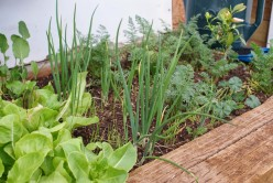 20 Fall Vegetable Gardening Tips For Better Results in the Spring
