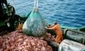 Overfishing:Death of an Ocean