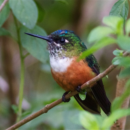 Taken in Ecuador