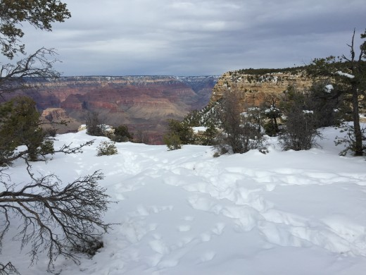 Grand Canyon encircled by snow