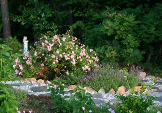 Floribunda rose in my garden.