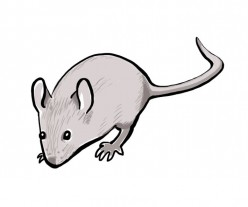 House Mice and How We Got Rid of Them the Natural Way