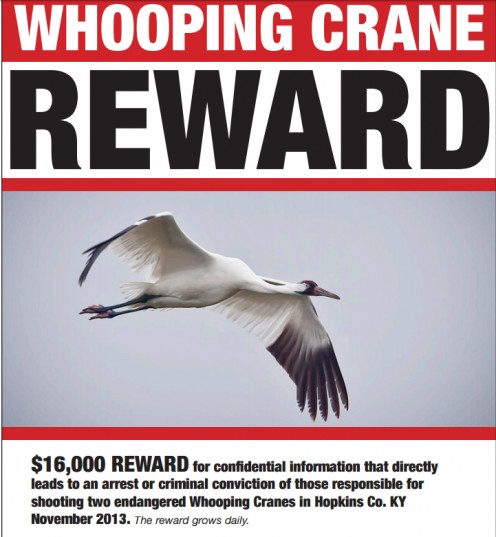 Poster seeking information on Whooping Crane deaths.