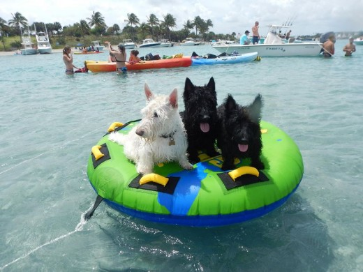 Sahara, Tucker and Bear out on the boat