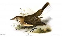 Joseph Smit  Catalogue of the Birds in the British Museum Volume 14.