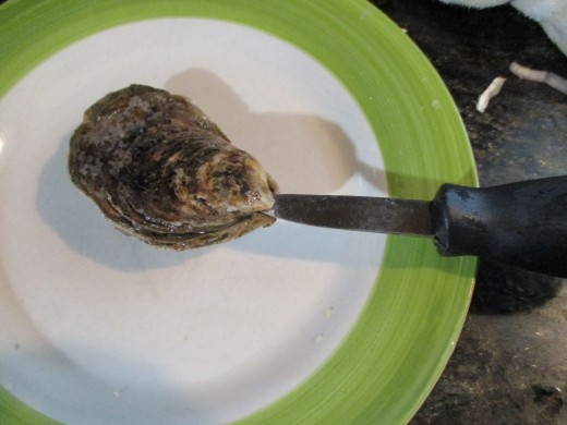 Insert oyster knife into point and pry shell open to shuck.