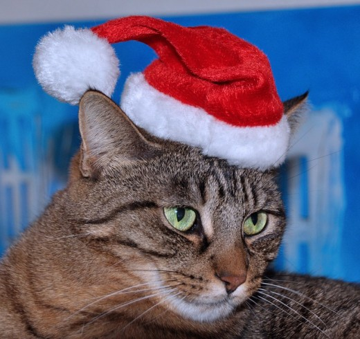 Cat Dressed Up For Christmas In A Santa Hat