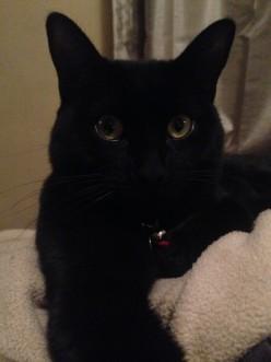 Cat Demands Cash and Copyright for Selfie