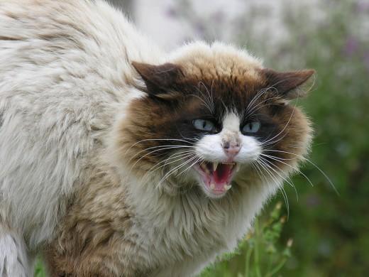 Cat in Barraña, Boiro, Galicia.