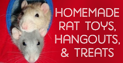 Homemade rat toys, hangouts, treats, and more