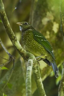 Taken in Queensland Australia