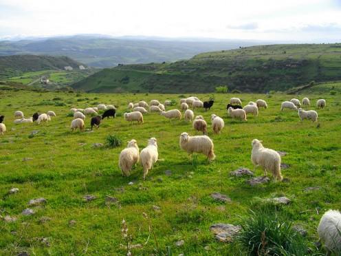Pastoral Scene - Credits #7