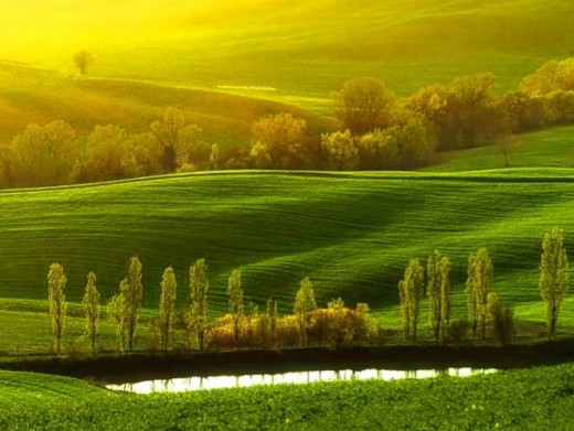 Sunset in Green and Gold - Credits #8