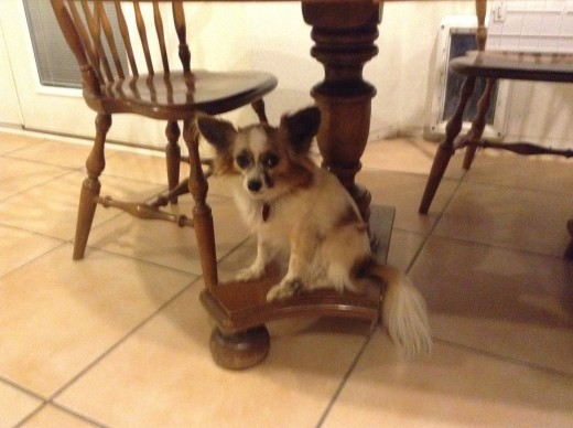 A doggie really under the table