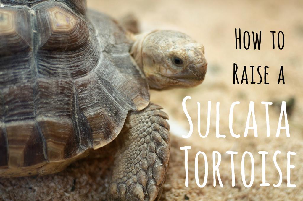 Tortoise Boy: A Chamber Play