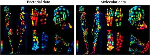 Body cells vs. Bacterial cells