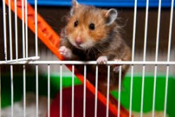 Top 10 Facts About Hamsters
