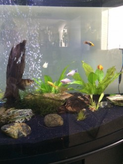 Is an Aquarium Right for My Child?