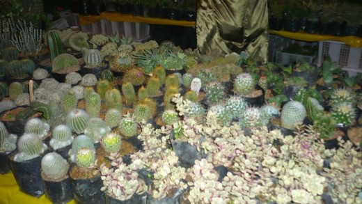 Plants for sale at the session road