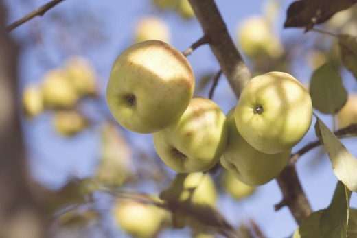 Apples are a good low-sugar fruit