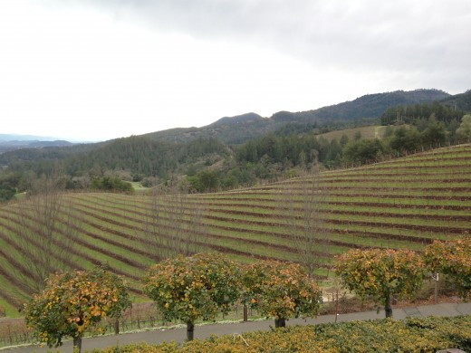 Vineyards at Newton Vineyard