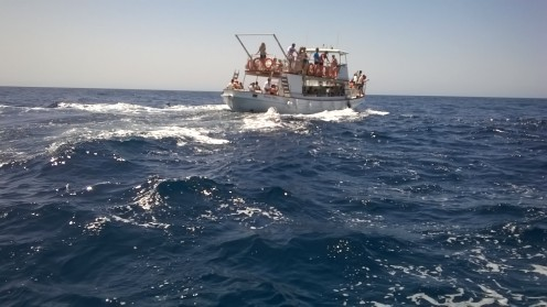 Dolphin and whale spotting off Gran Canaria, Canary Islands